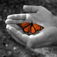 Don't Let Your Butterfly Flutter By